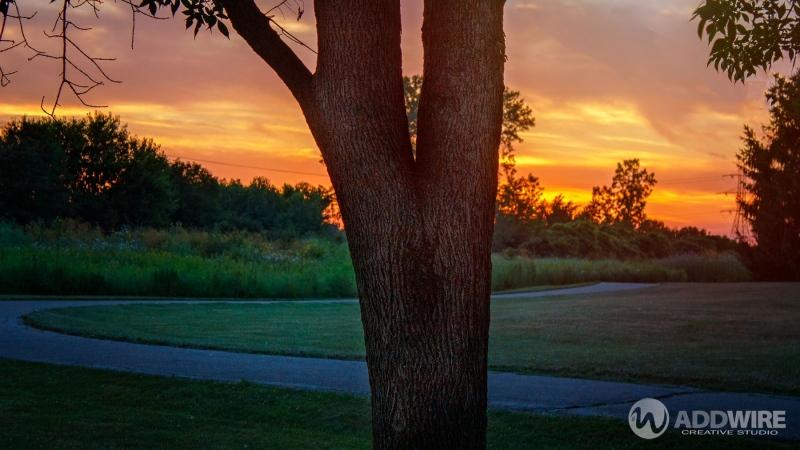 Tree-Sunset-WM