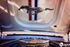 White-Mustang-1